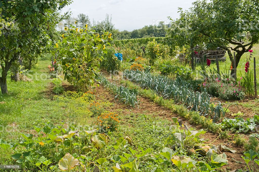 allotment garden royalty-free stock photo