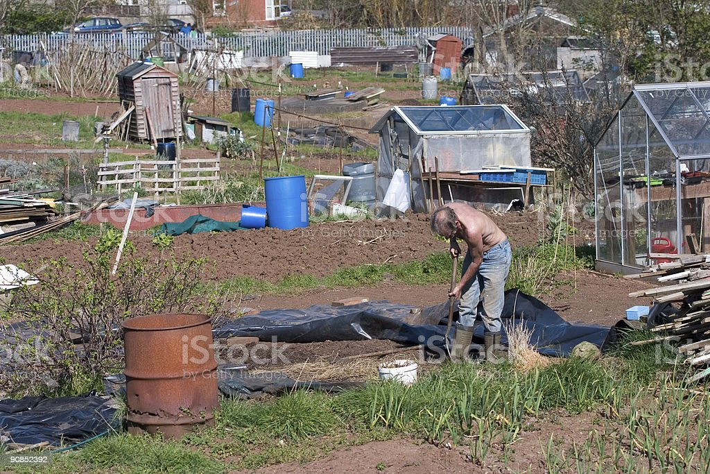 Allotment gardener working royalty-free stock photo