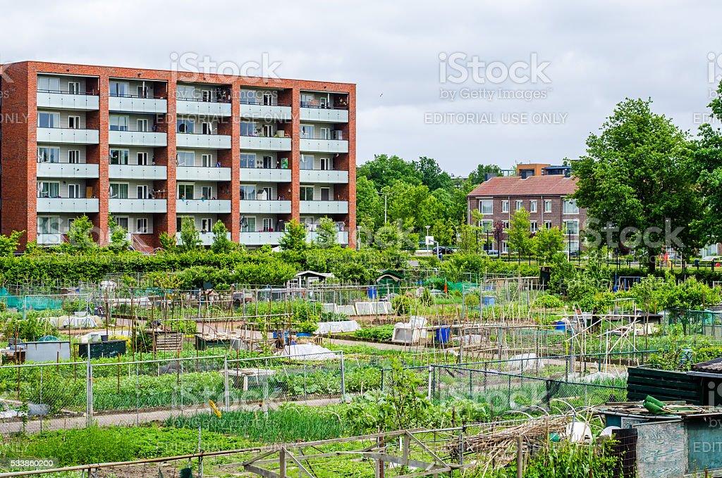 Allotment gardens in Amersfoort stock photo