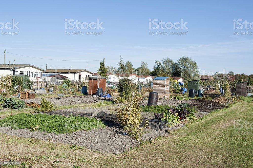 Allotment growing vegetables royalty-free stock photo