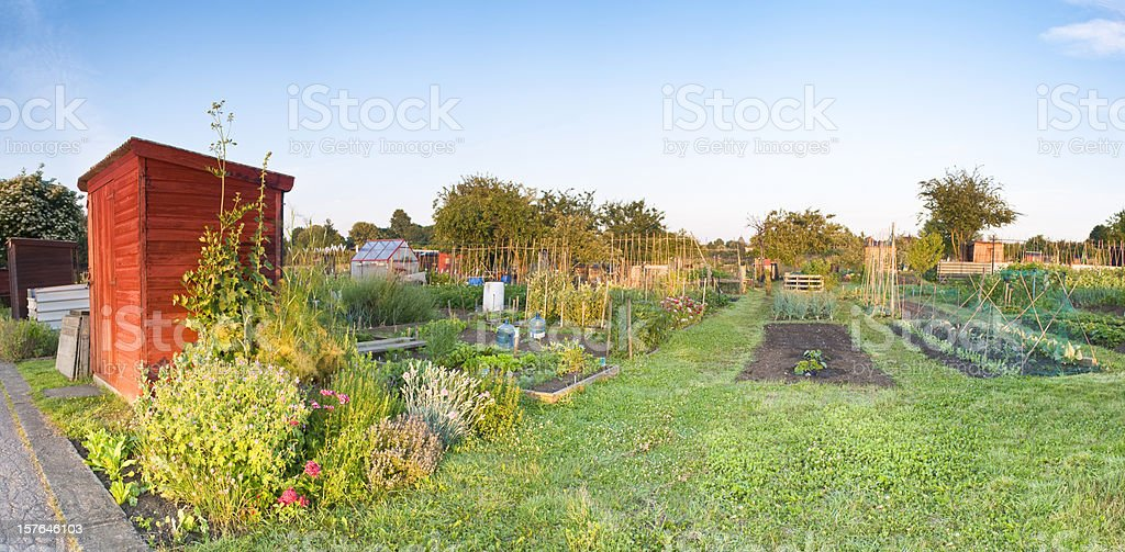 Allotment panorama with shed and vegetables. royalty-free stock photo