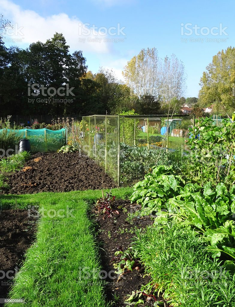 Allotment vegetable garden, plots, plastic water-butts / compost heaps / bins, fruit-cages stock photo