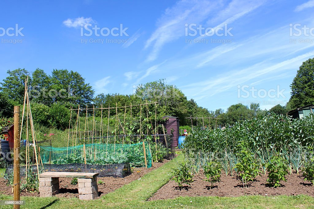Allotment vegetable garden with grass path stock photo