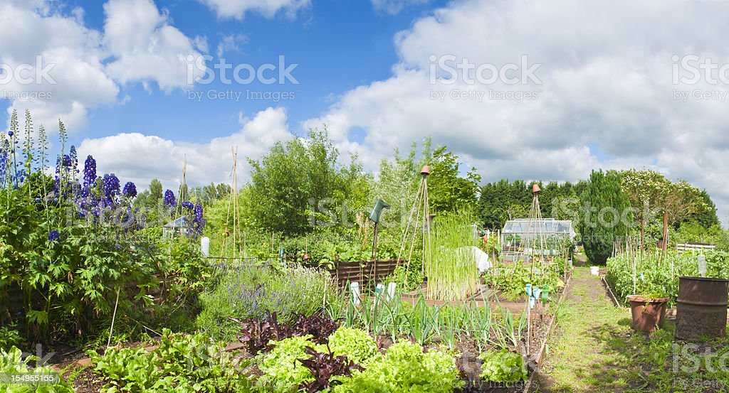 allotments in full bloom. stock photo