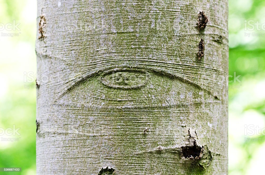 All-Seeing Eye of God on a tree bark stock photo