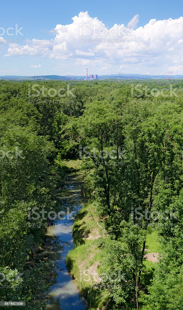 alluvial forest with water course stock photo