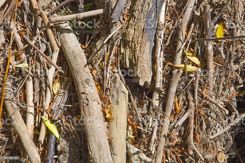 alluvial wood - background stock photo