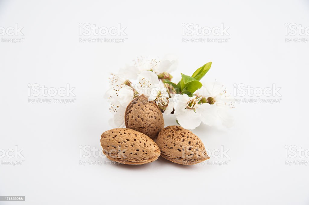 Almond and flowers stock photo