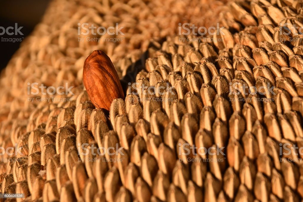 Almond stands out in Sunflower seeds stock photo