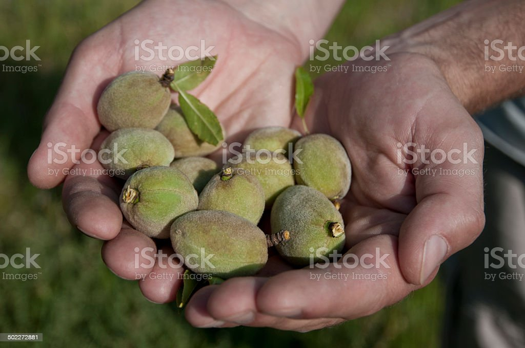 Amandes royalty-free stock photo