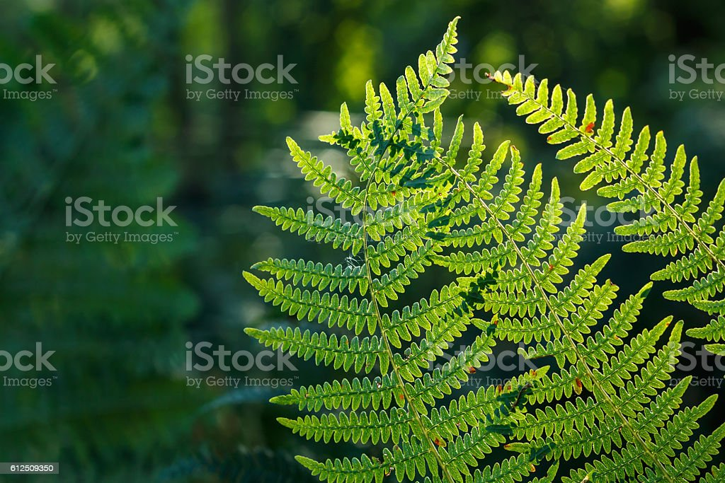 Almost autumn fern leaves stock photo