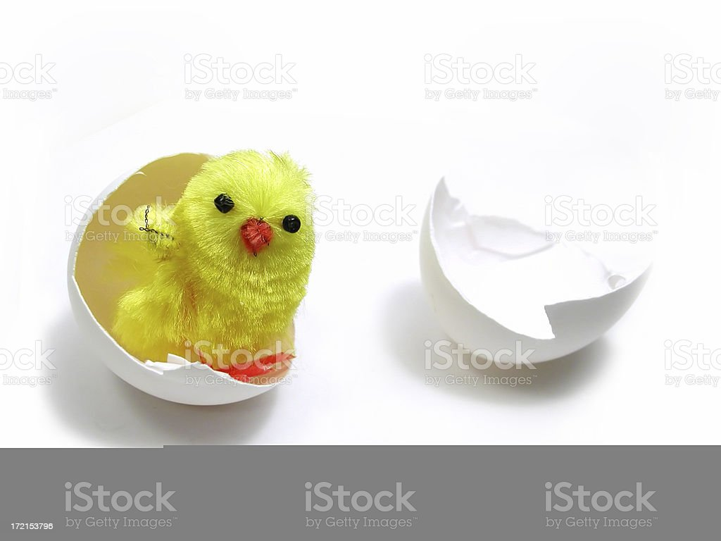 Almost Hatched royalty-free stock photo