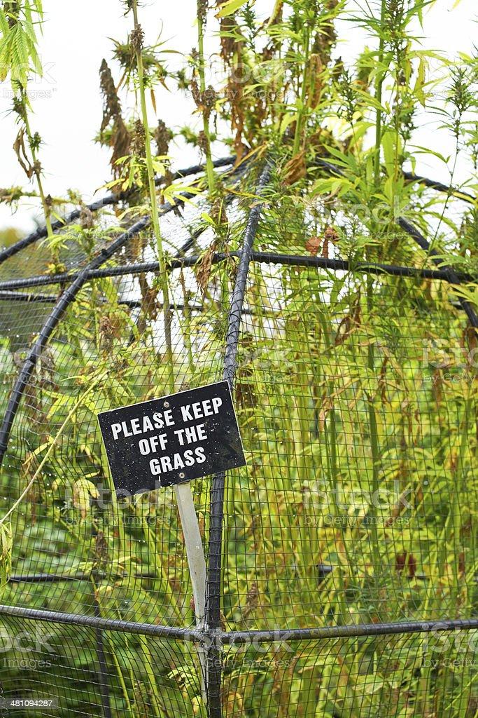 Alnwick Garden stock photo