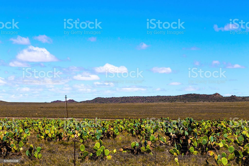 Aloe farming in the Free State, South Africa stock photo