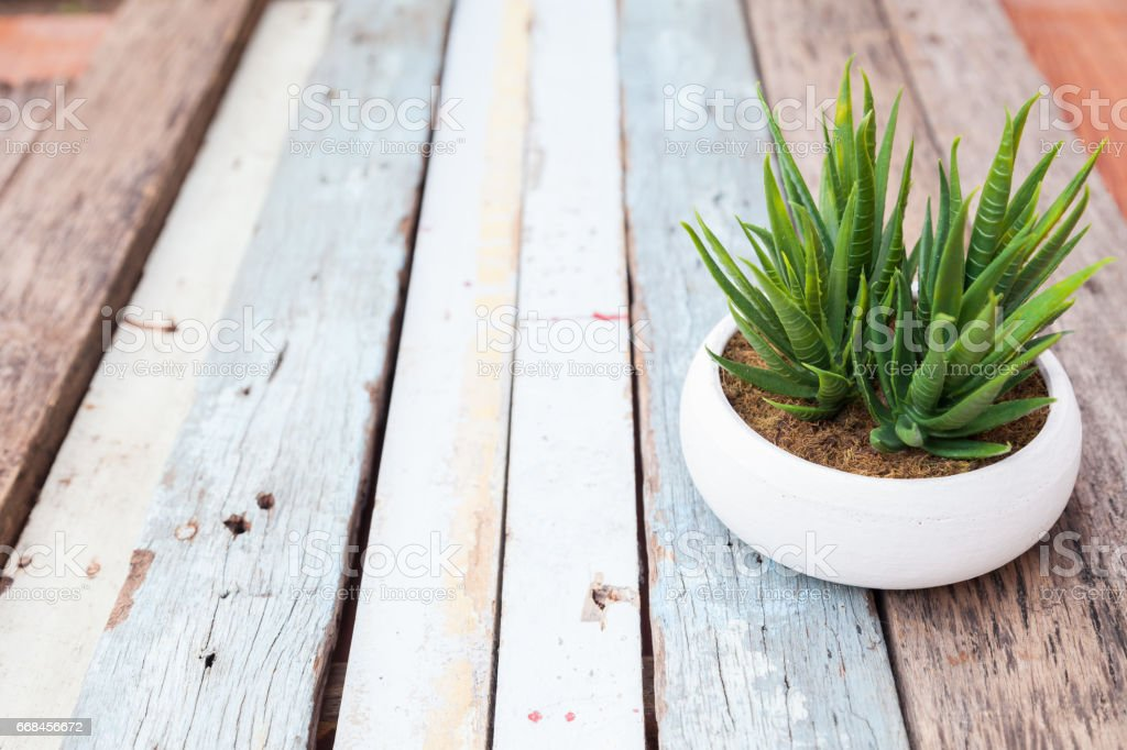 Aloe Vera in vase white on plank wood stock photo