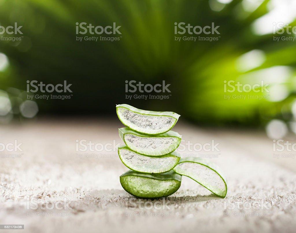 Aloe Vera Leaves stock photo