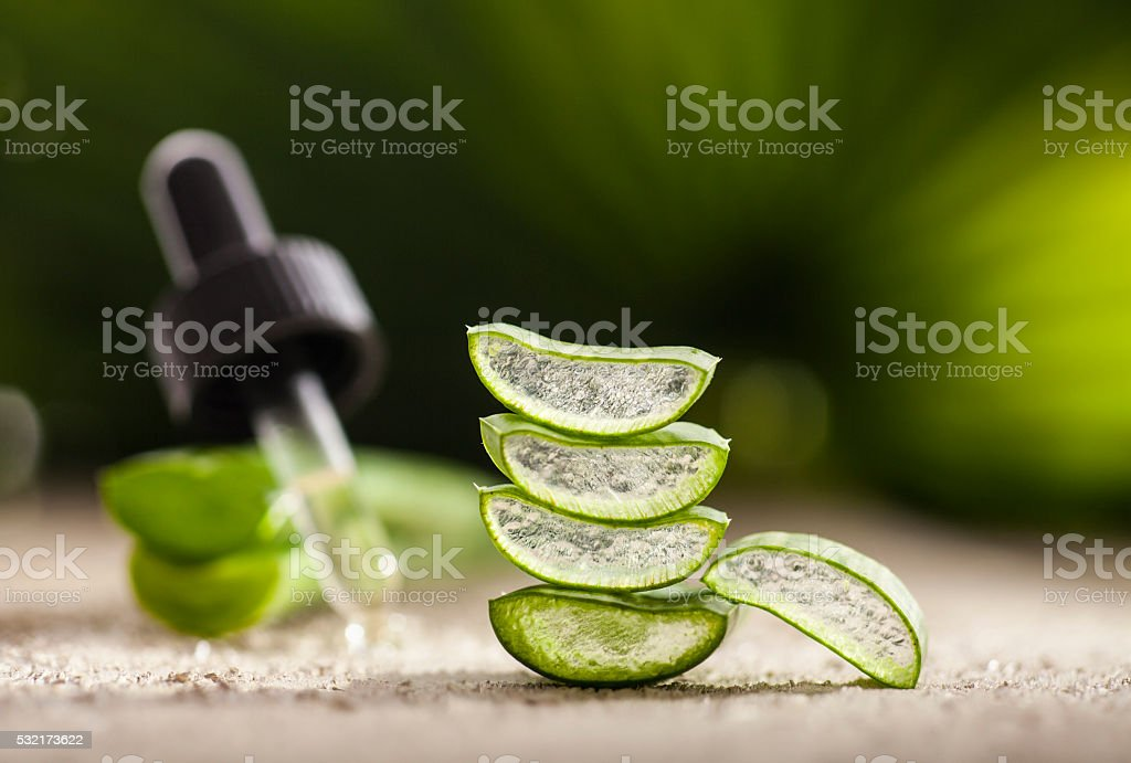 Aloe Vera Leaves stock photo