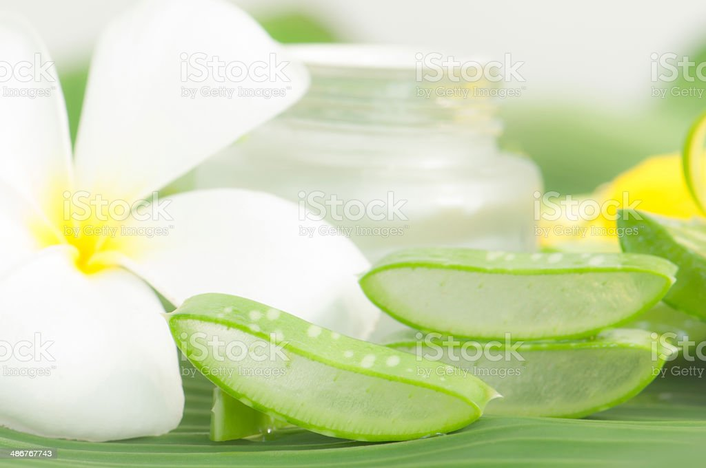 Aloe vera plant for skincare stock photo