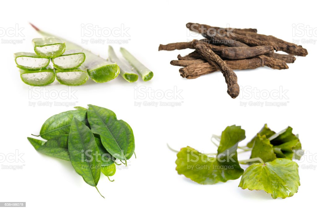 Aloe vera plant, stargrass root, centella leaf, and Tiliacora triandra stock photo