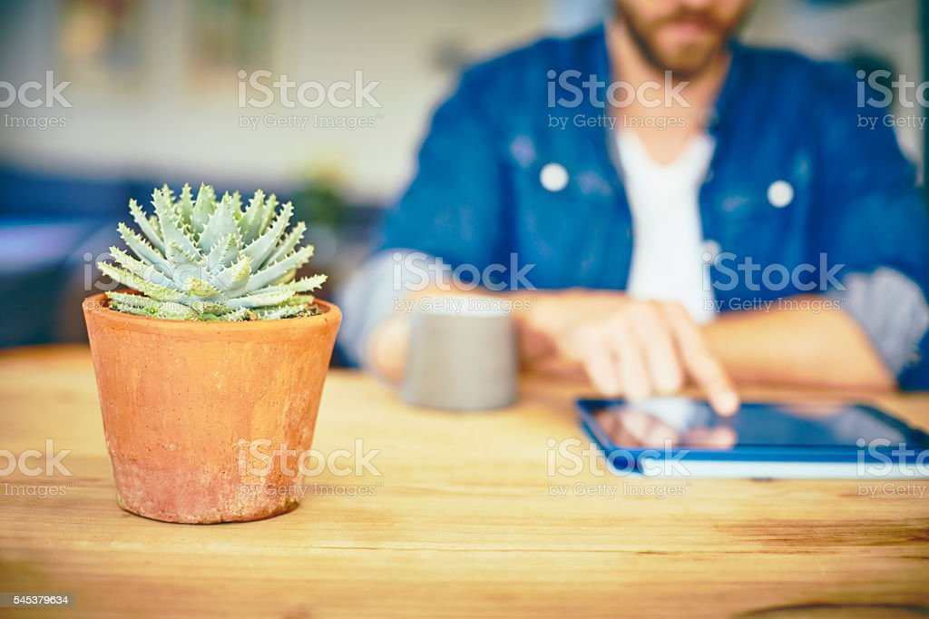 Aloe vera plant with man using digital tablet at home stock photo