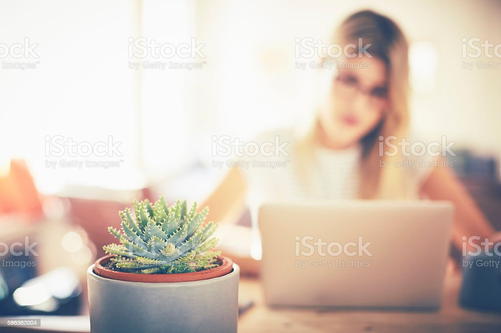 Aloe vera plant with woman using laptop at home stock photo