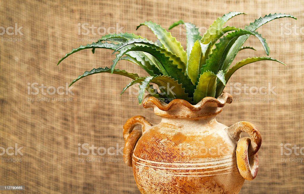 Aloes plant in terracotta pot with a jute background royalty-free stock photo