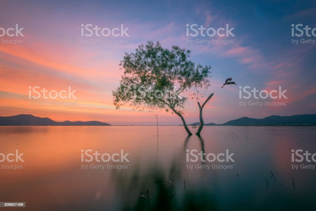 alone alive tree is in the flood of lake stock photo