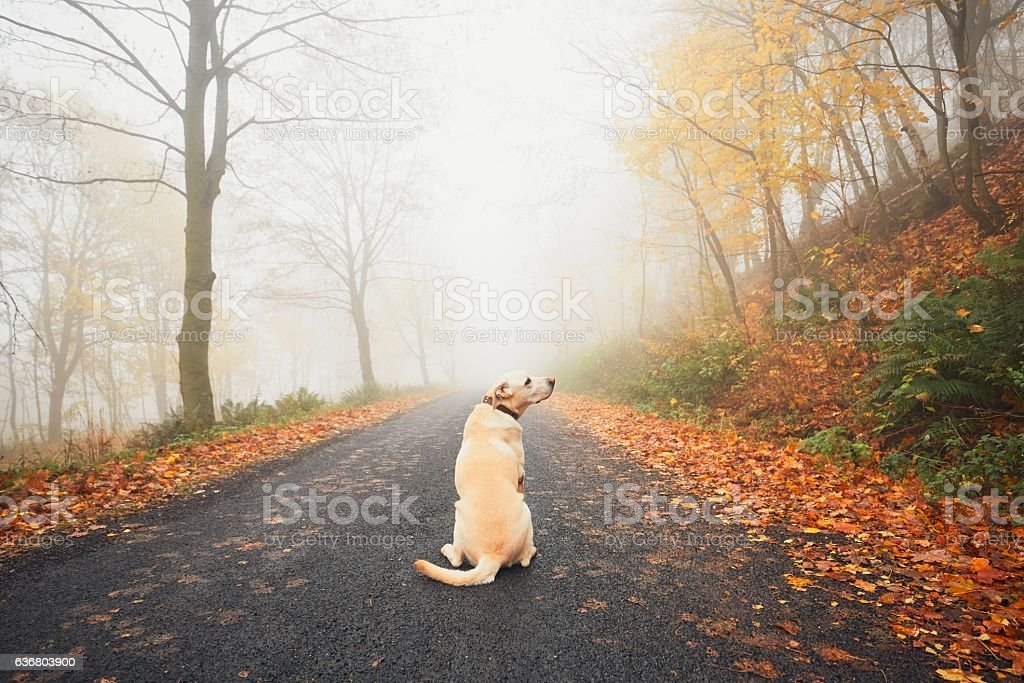 Alone dog in mysterious fog in autumn stock photo