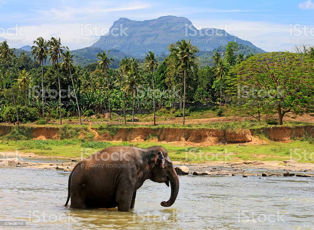 alone elephant in in jungle stock photo