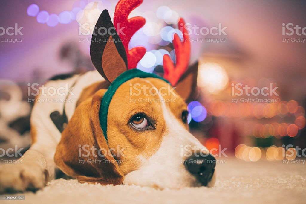 Alone for Christmas stock photo