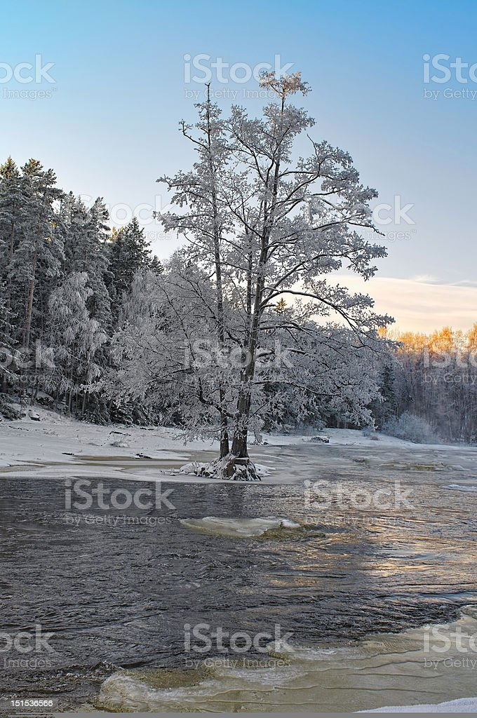Alone frozen tree royalty-free stock photo