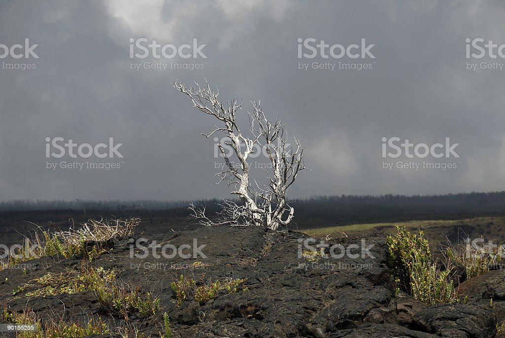 Alone In The Lava royalty-free stock photo