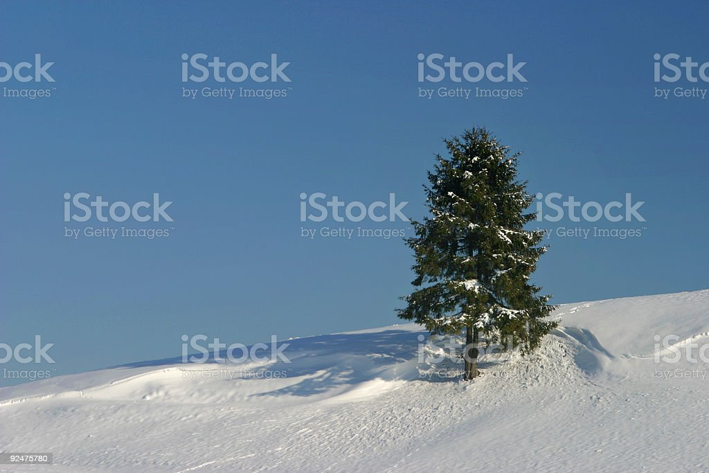 Alone in the winter royalty-free stock photo