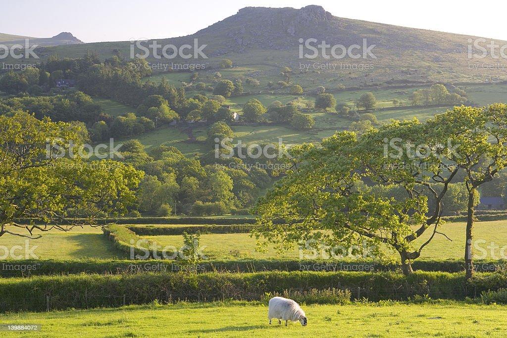 Alone on Dartmoor royalty-free stock photo