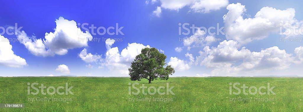 Alone one big tree on green field . Panorama royalty-free stock photo