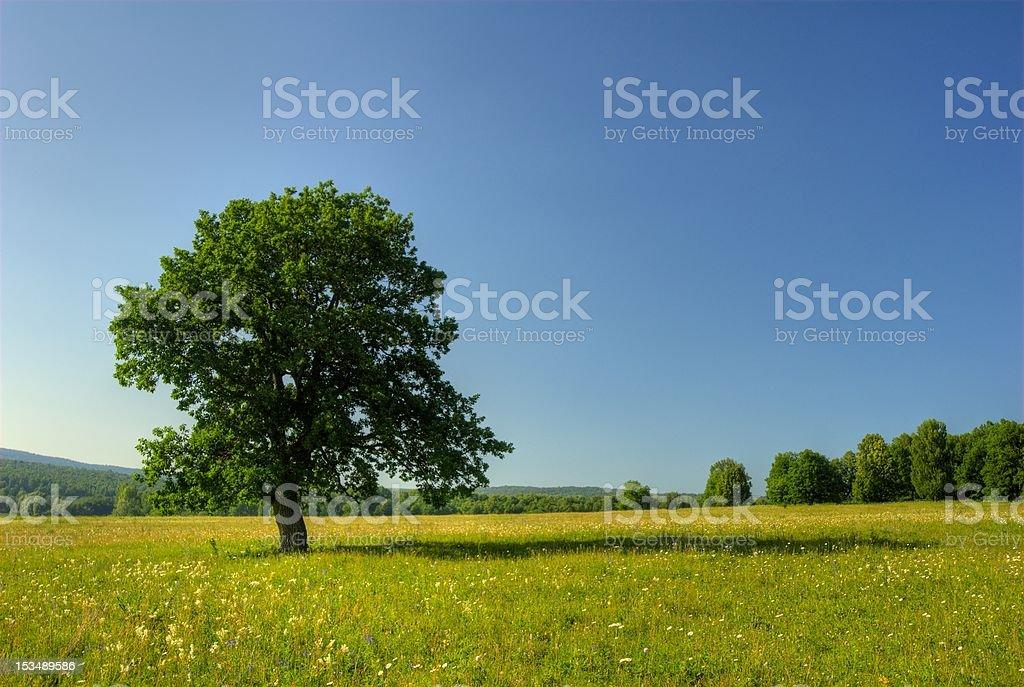 Alone pastoral tree royalty-free stock photo