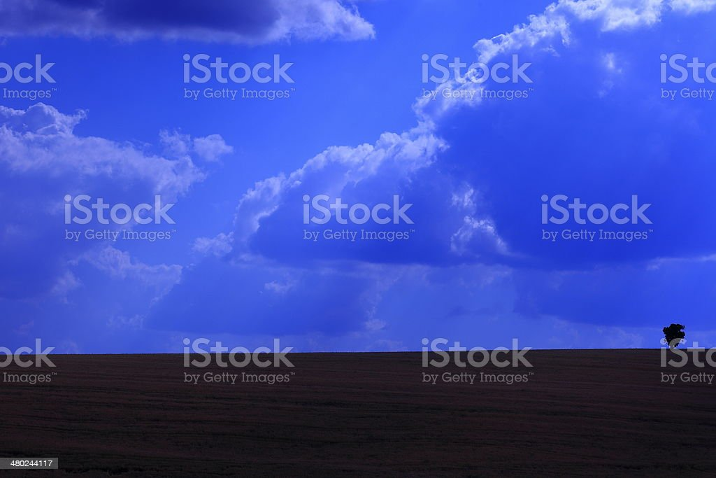 Alone small tree on blue twilight with sunrays and clouds stock photo
