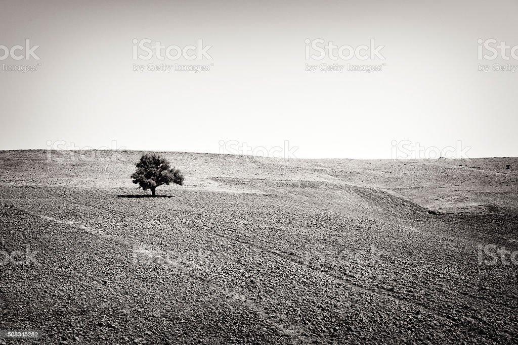 Alone tree in field stock photo