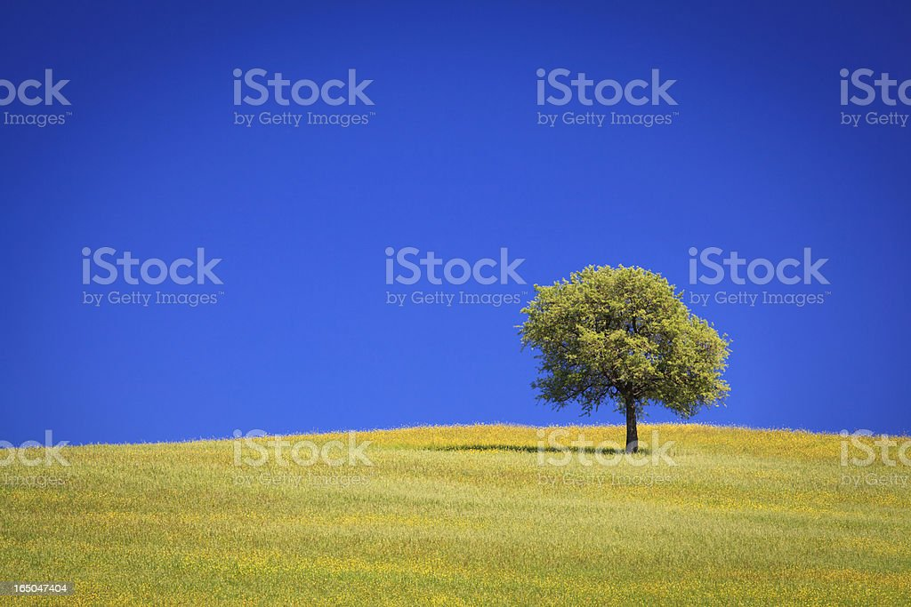 Alone tree in the field royalty-free stock photo