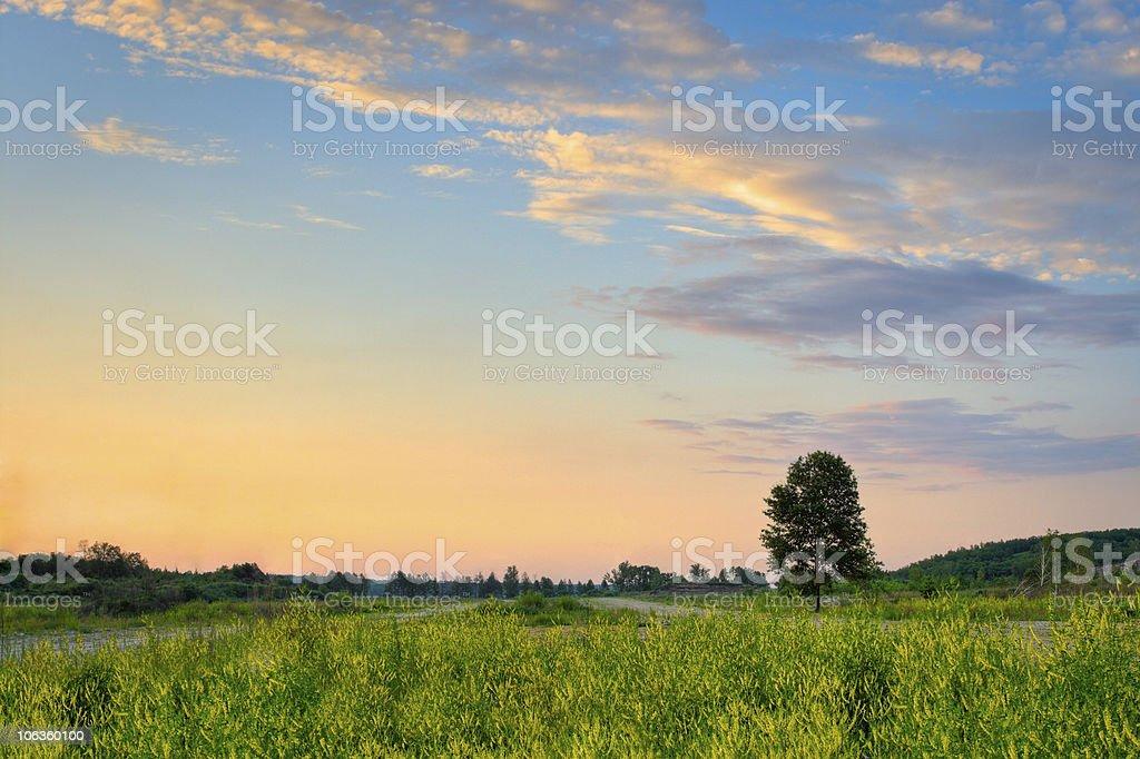 alone tree on sunset royalty-free stock photo