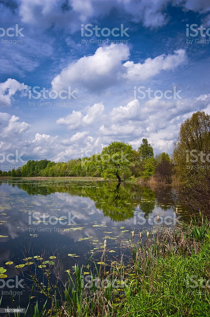 Alone tree on the edge of beautiful lake royalty-free stock photo