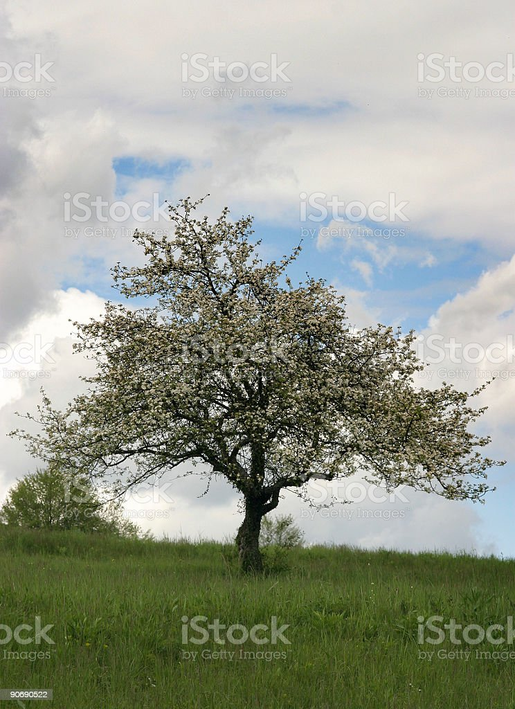 Alone under the sky royalty-free stock photo