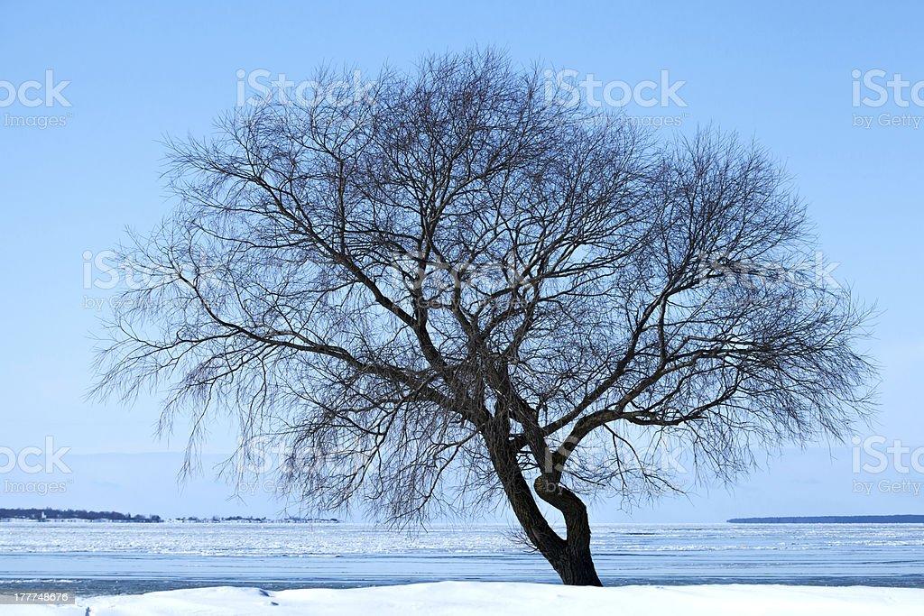 Alone winter tree silhouette on the sea coast royalty-free stock photo