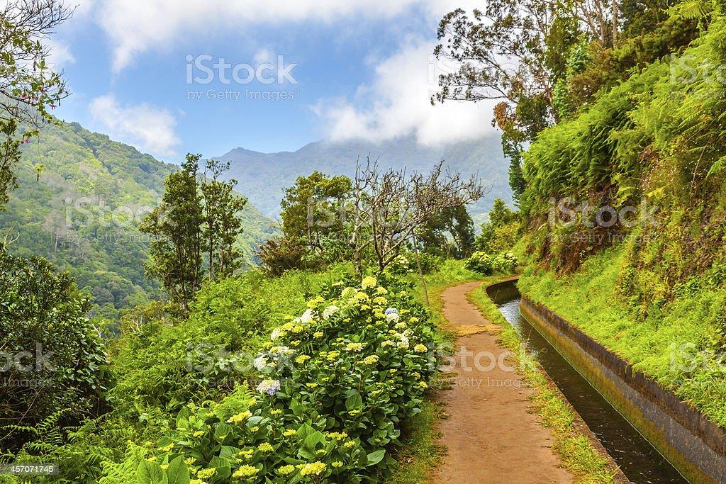 Along the Levada, Madeira stock photo