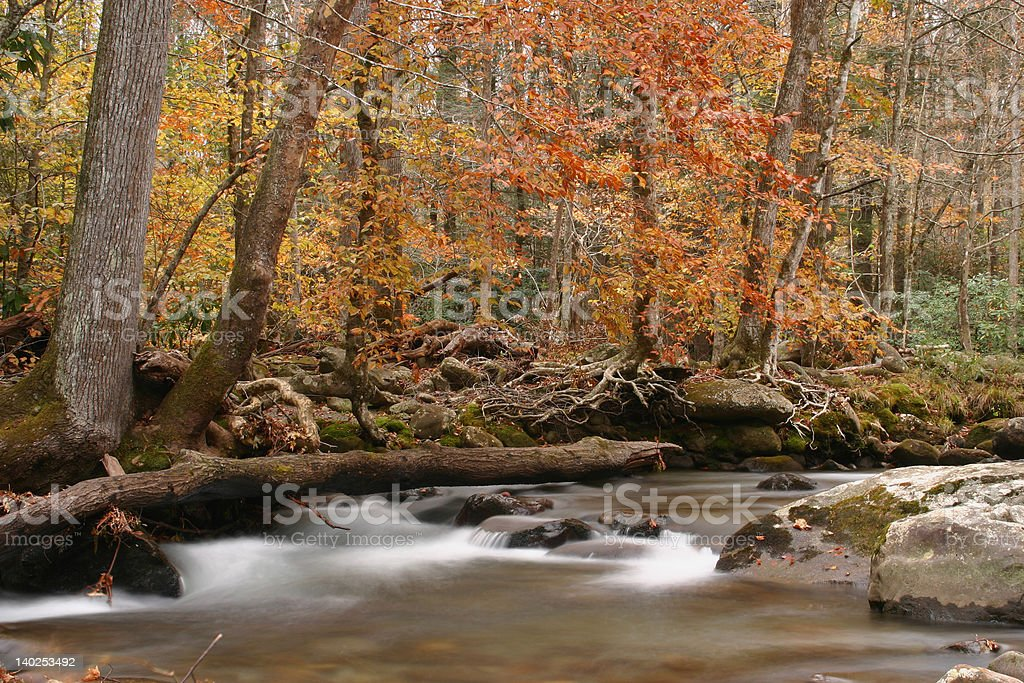 Along the Stream in Autumn royalty-free stock photo