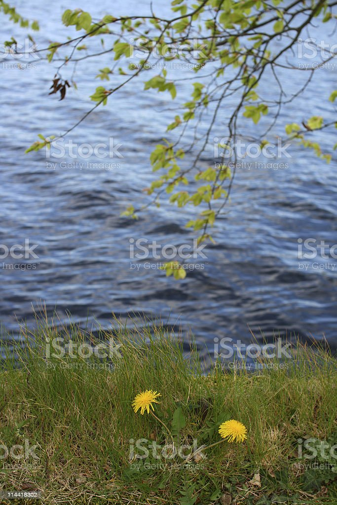Alongside The River Shannon stock photo