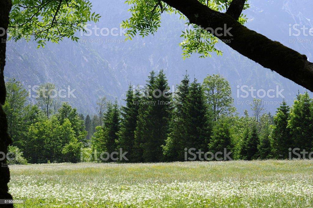 Alp Medow stock photo