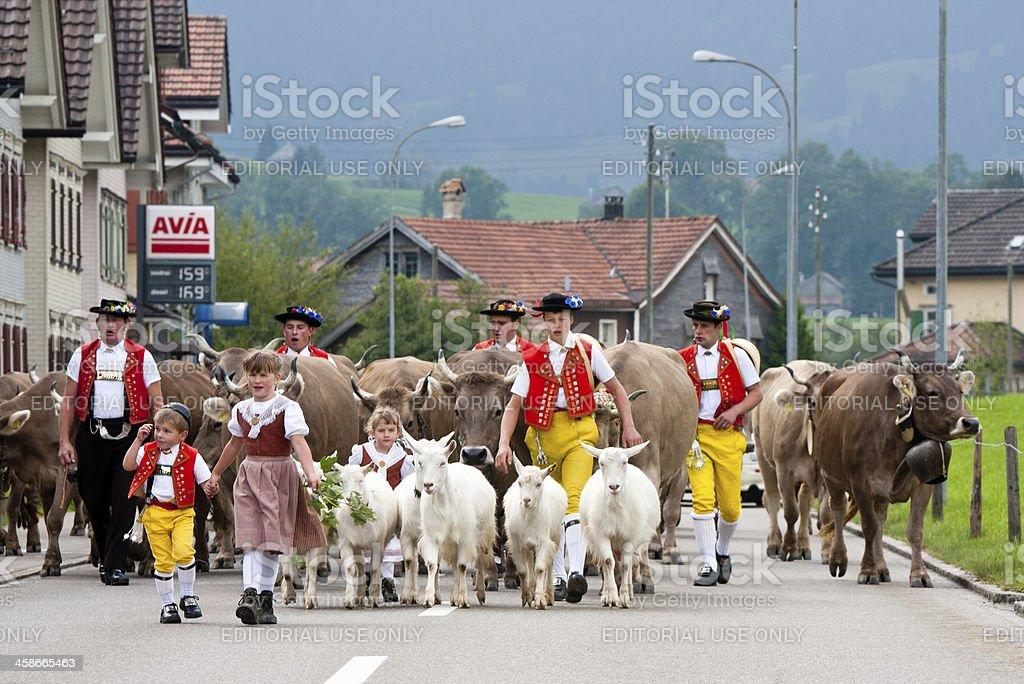Alpabzug in Urnaesh Switzerland stock photo