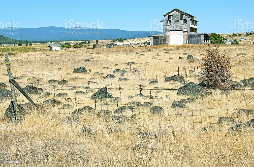 Alpaca ranch with half-finished house in Washington state royalty-free stock photo