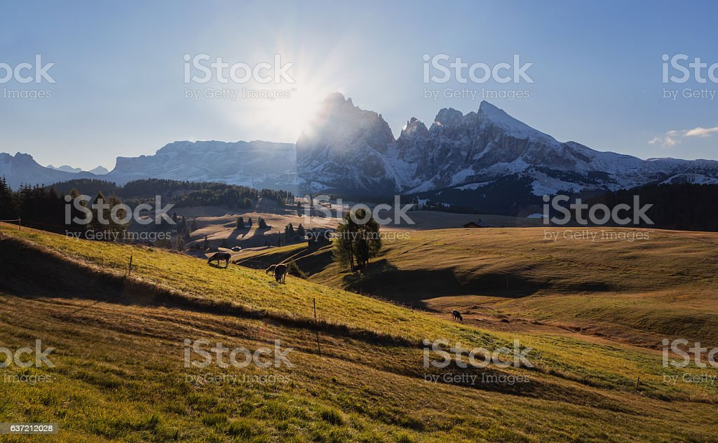 Alpe di Siusi pasture autumn trees path stock photo